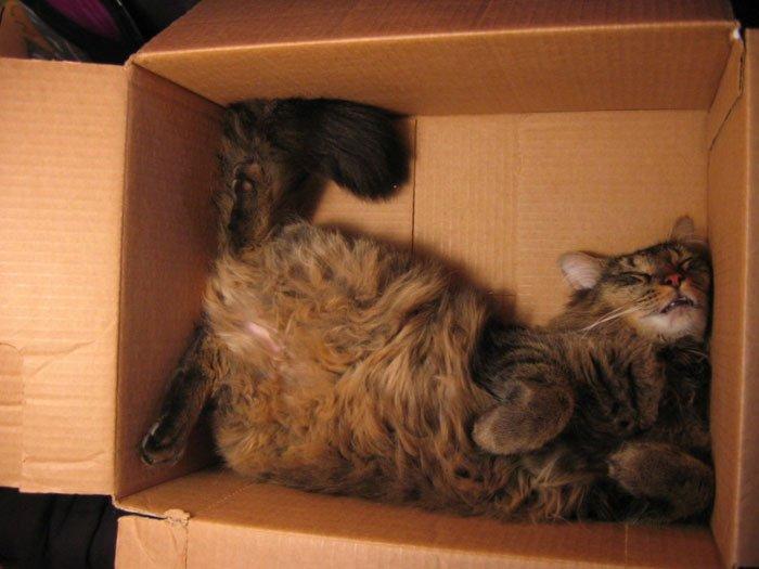23 gatos que se duermen en el lugar más insospechado Gatos-dormidos-sitios-raros1