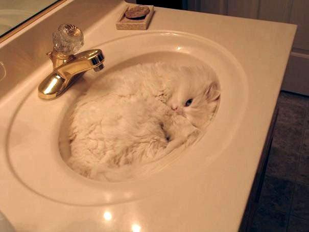 23 gatos que se duermen en el lugar más insospechado Gatos-dormidos-sitios-raros11