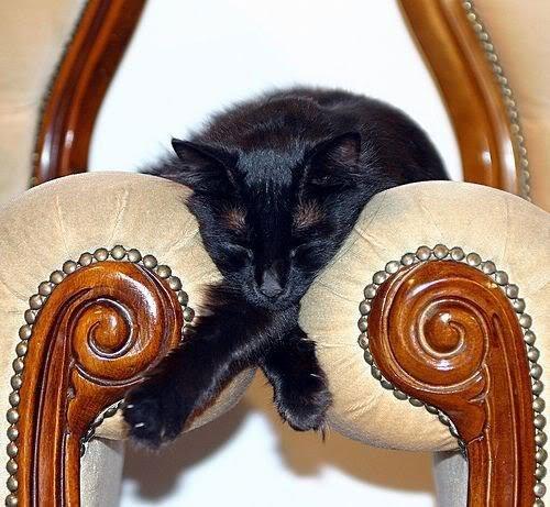 23 gatos que se duermen en el lugar más insospechado Gatos-dormidos-sitios-raros16