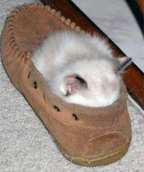 23 gatos que se duermen en el lugar más insospechado Gatos-dormidos-sitios-raros20