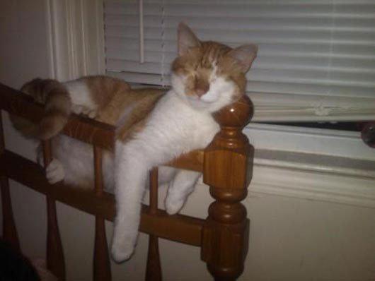 23 gatos que se duermen en el lugar más insospechado Gatos-dormidos-sitios-raros21