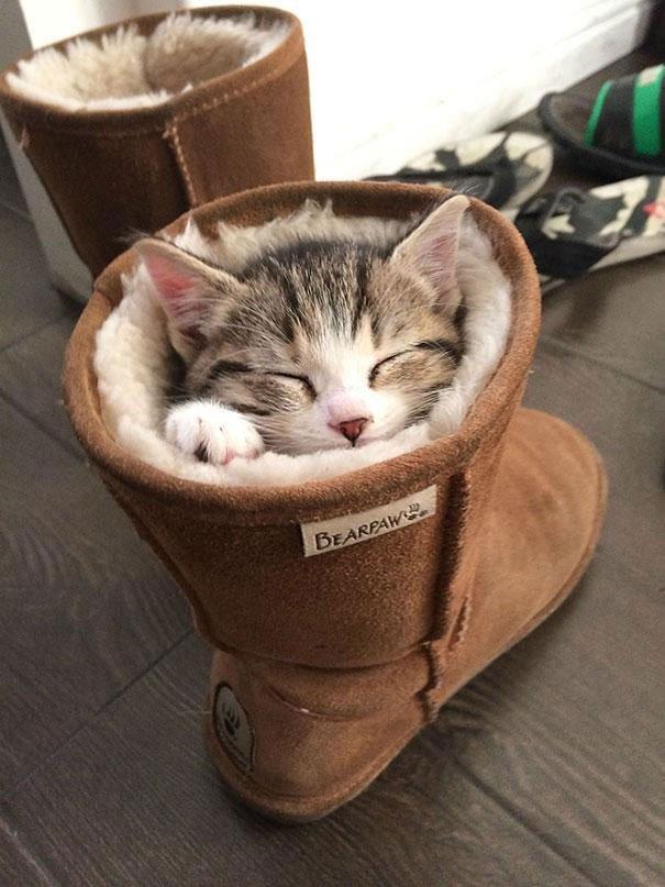 23 gatos que se duermen en el lugar más insospechado Gatos-dormidos-sitios-raros23