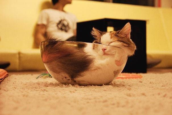 23 gatos que se duermen en el lugar más insospechado Gatos-dormidos-sitios-raros3