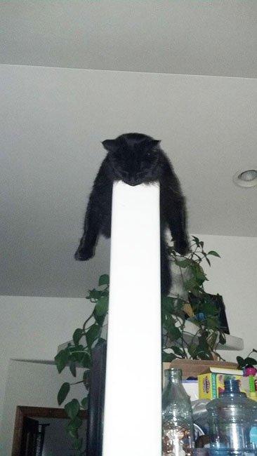 23 gatos que se duermen en el lugar más insospechado Gatos-dormidos-sitios-raros7
