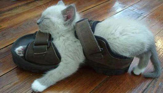 23 gatos que se duermen en el lugar más insospechado Gatos-dormidos-sitios-raros8