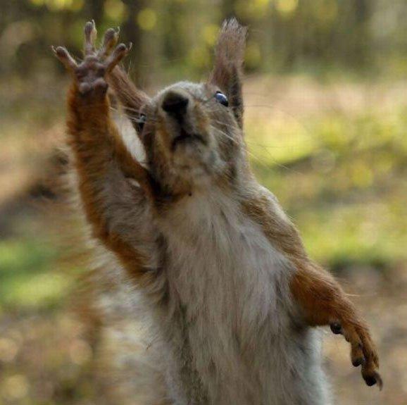 ardilla-saludando