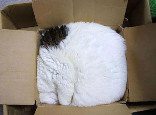 gatos-dormidos-sitios-raros17