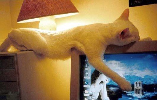 gatos-dormidos-sitios-raros19
