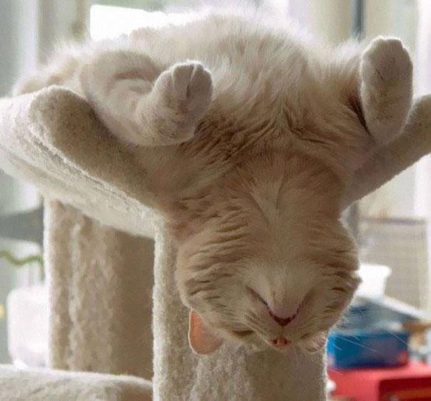 gatos-dormidos-sitios-raros22