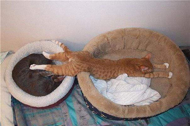 gatos-dormidos-sitios-raros6