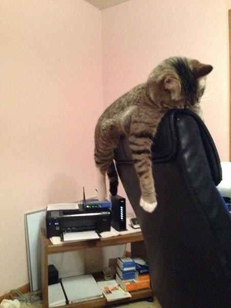 gatos-dormidos-sitios-raros9