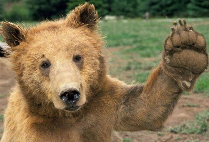 oso-saludando-2