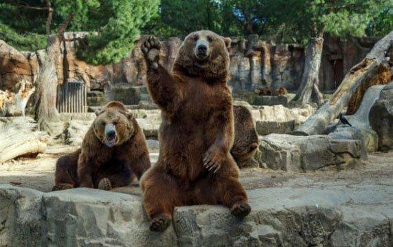 oso-zoologico-saludando
