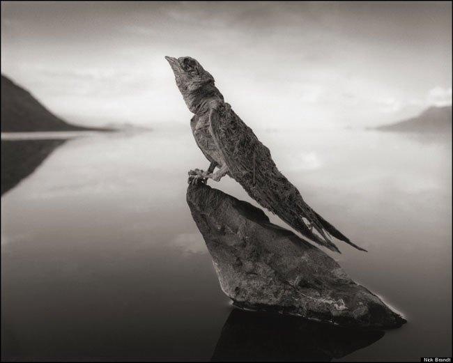 animales-piedra-lago-natron2