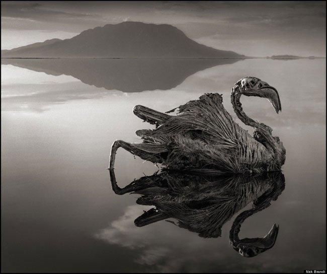 animales-piedra-lago-natron4
