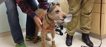 Duffy fue operado de la vista y se emocionó al volver a ver a sus dueños. ¡Precioso!