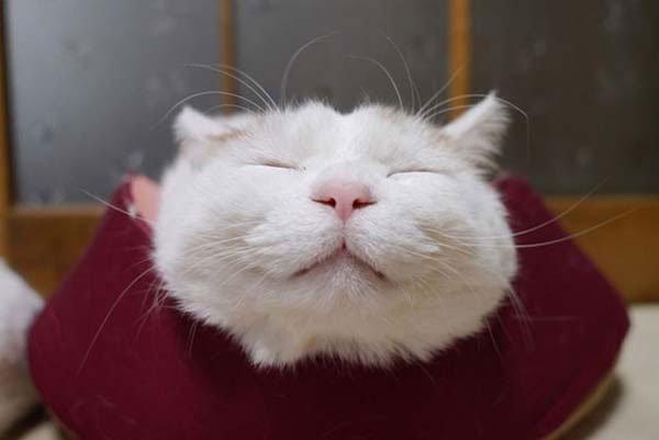 gato-zen3
