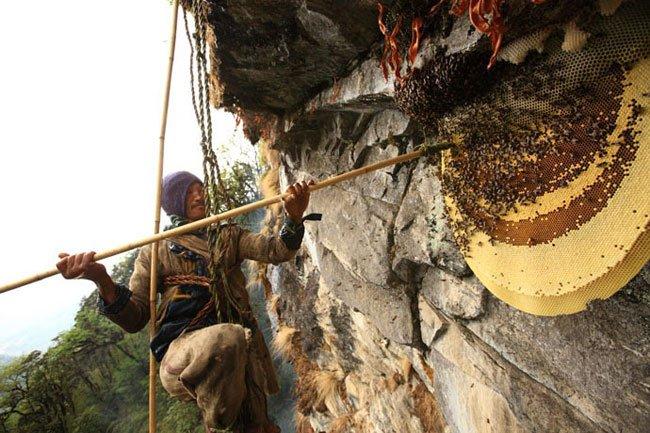 miel-nepal-gurung13