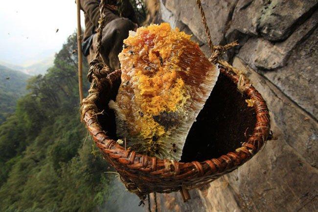 miel-nepal-gurung15