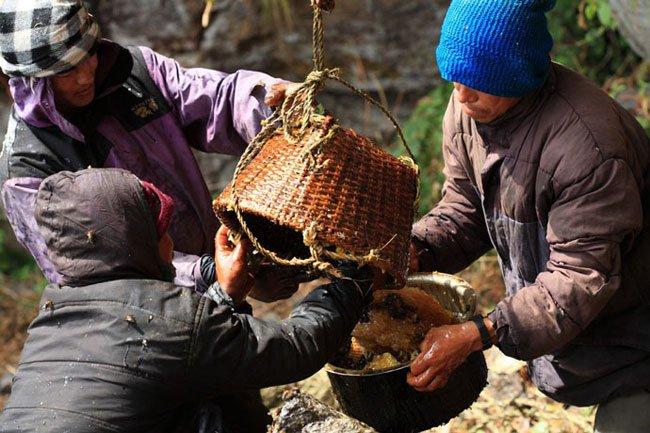 miel-nepal-gurung17