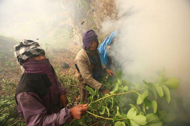 miel-nepal-gurung9
