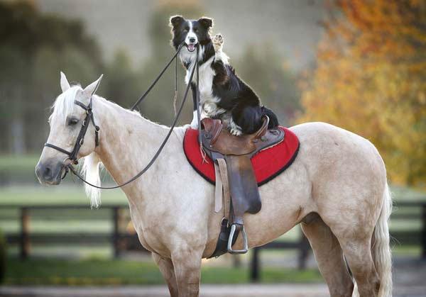 perro-monta-a-caballo1
