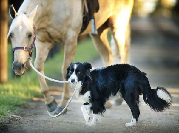 perro-monta-a-caballo2
