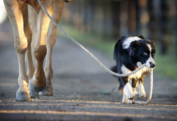 perro-monta-a-caballo4