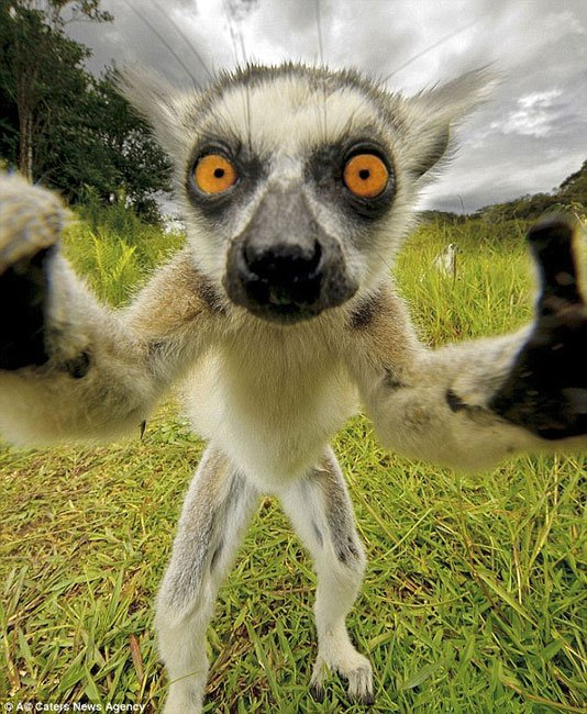 selfie-animales1