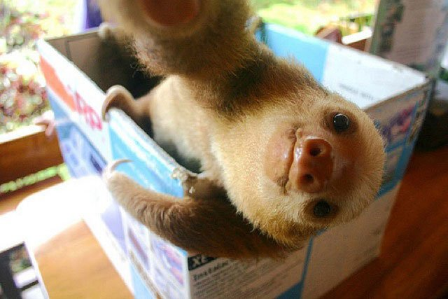 selfie-animales11