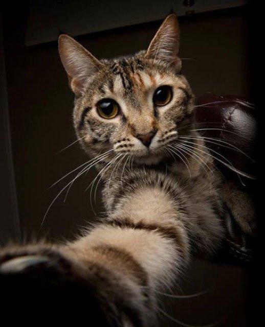 selfie-animales17
