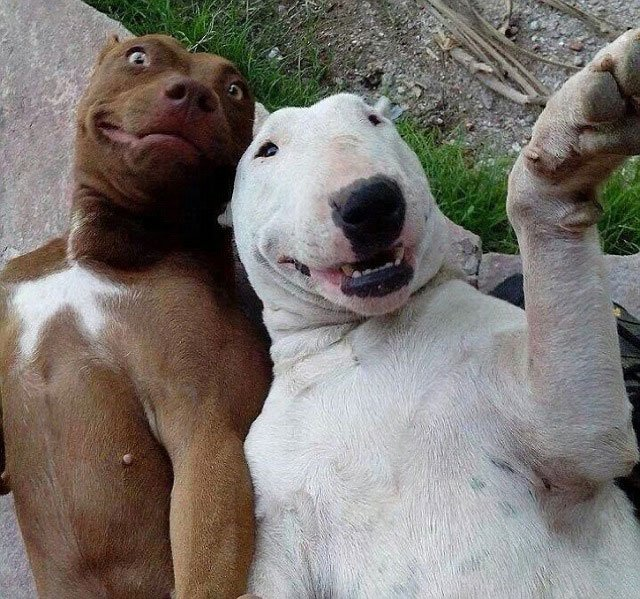 selfie-animales18