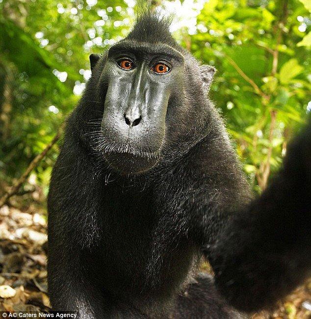 selfie-animales2