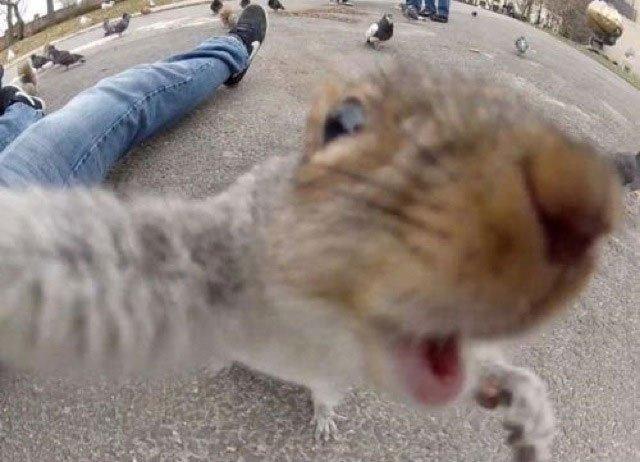 selfie-animales6
