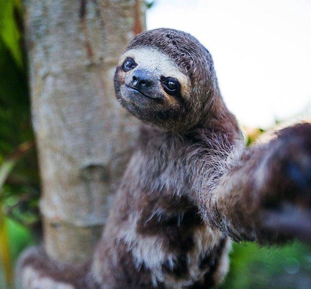selfie-animales7