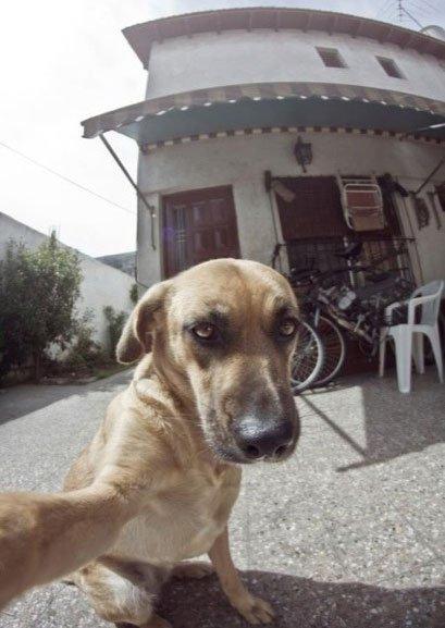selfie-animales9