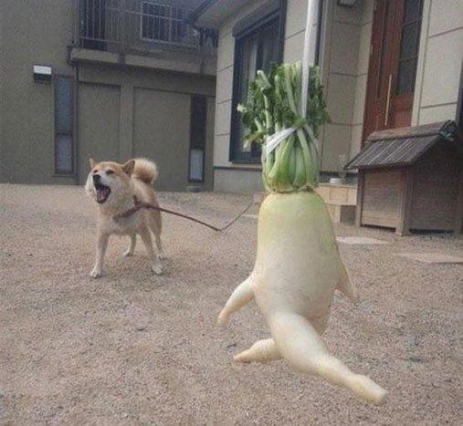 vegetales-identidad19