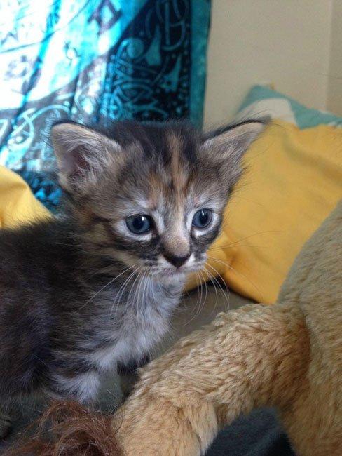 gato-triste5