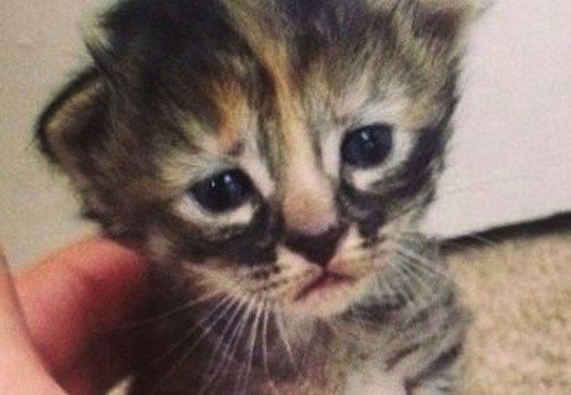 gato-triste6