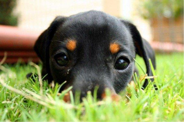 miradas-tiernas-perros7
