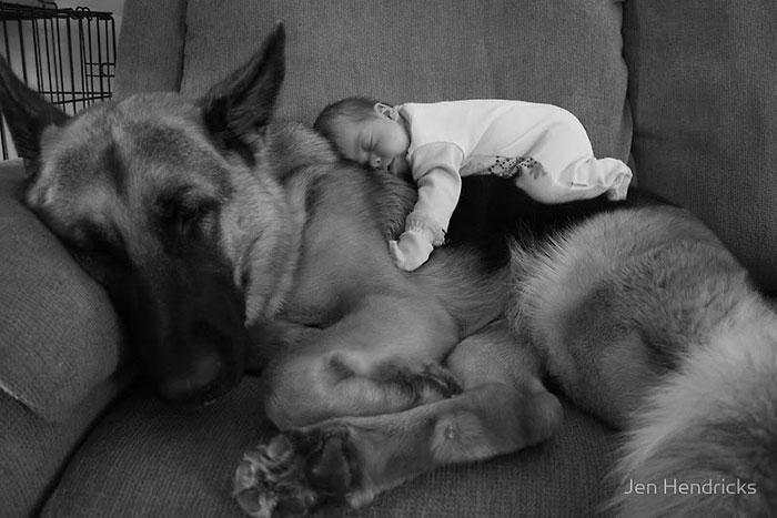 perros-grandes-bebes1