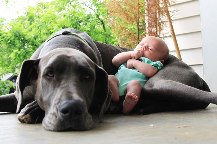 perros-grandes-bebes10