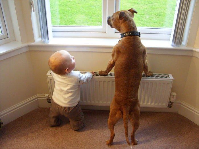 perros-grandes-bebes11