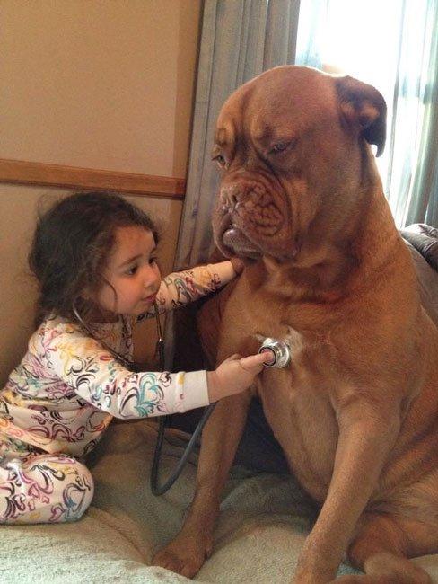 perros-grandes-bebes14