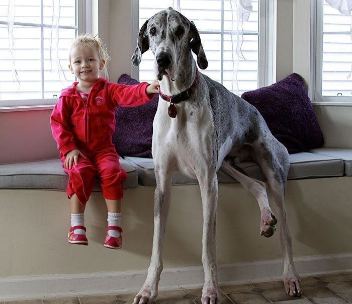 perros-grandes-bebes16