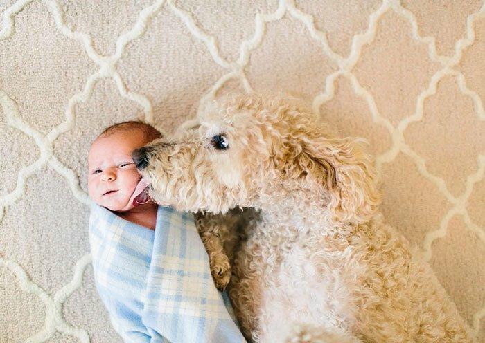 perros-grandes-bebes17