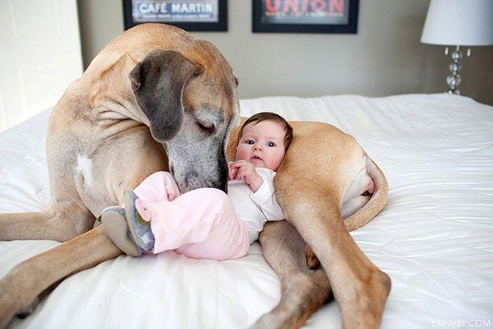perros-grandes-bebes18