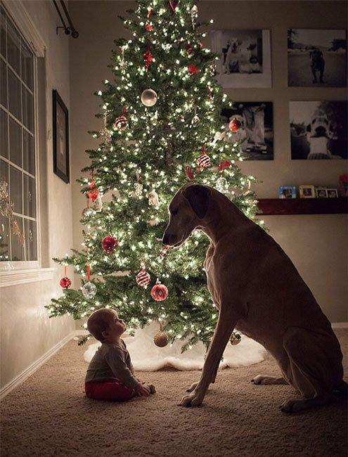 perros-grandes-bebes2