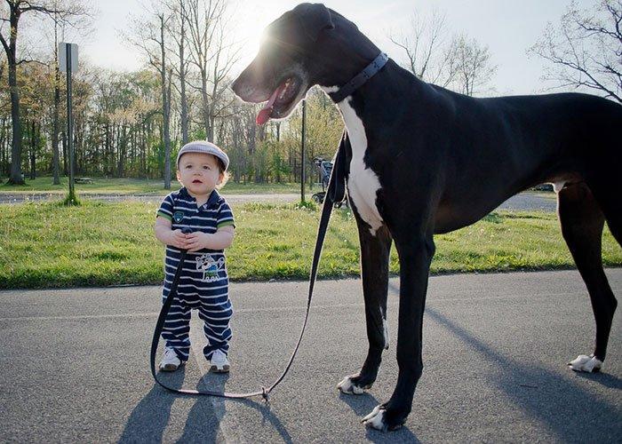 perros-grandes-bebes21