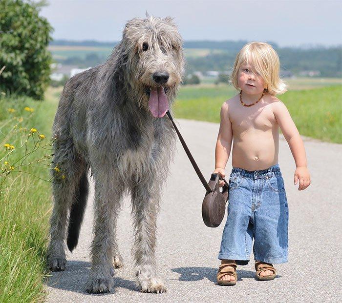 perros-grandes-bebes22